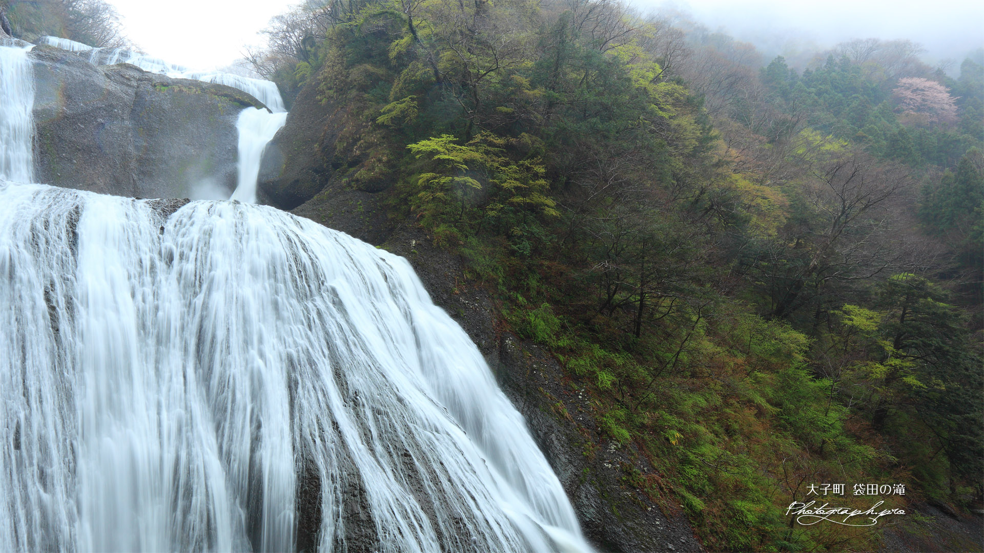 月居山の桜 袋田の滝