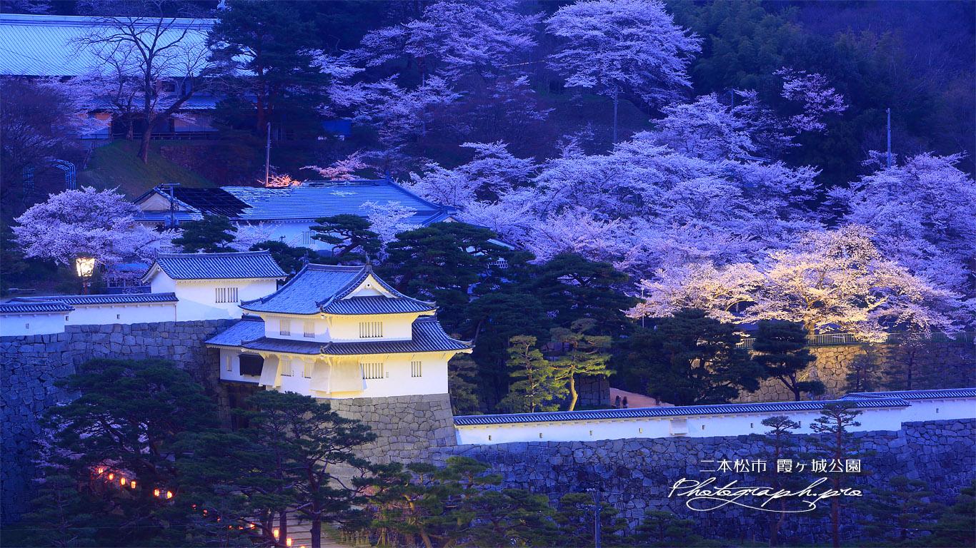 霞ヶ城公園の桜 壁紙