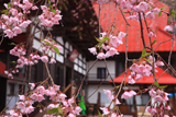 慈徳寺の種蒔桜