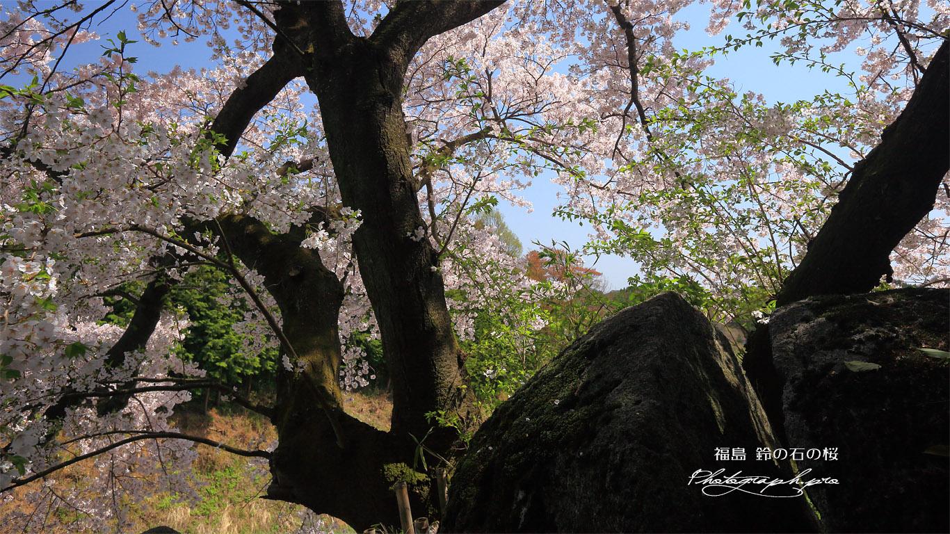 鈴の石の桜 壁紙