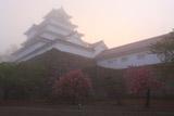 朝霧の鶴ヶ城の桜