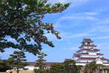 鶴ヶ城 サトザクラと天守閣