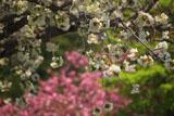 磐梯熱海温泉のギョイコウ