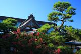 浄泉寺 サルスベリと本堂
