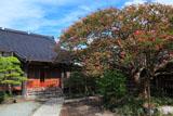 鎌倉補陀洛寺 サルスベリと本堂