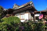 浄泉寺 フヨウと本堂