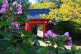 浄泉寺 芙蓉と赤門