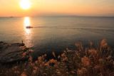 江の島 稚児ヶ淵のススキ尾花