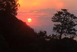 江の島 松と夕日