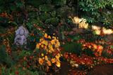 長法寺 朧泉の散紅葉