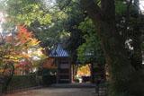 京都蔵王堂 紅葉と仁王門