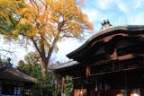 光福寺 黄葉の蔵王堂と不動堂