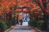 京都蔵王堂 桜紅葉の参道