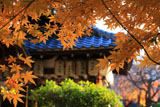 綾戸国中神社 紅葉越しの拝殿