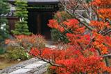 天祥院 躑躅紅葉