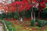 智勝院 苔庭の紅葉