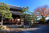 浄福寺 本堂と欅紅葉
