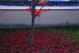 浄福寺 散り紅葉