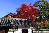 浄福寺長徳院の紅葉