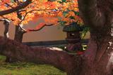 黄梅院 石灯籠と紅葉