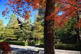 大徳寺 紅葉と仏殿