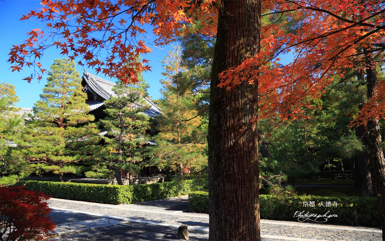 大徳寺 紅葉と仏殿 壁紙
