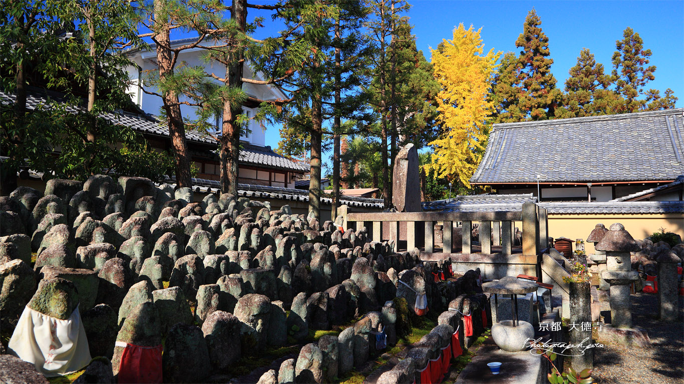 大徳寺 千躰地蔵塚と公孫樹黄葉 壁紙