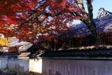 下御霊神社 築地塀と紅葉