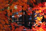 下御霊神社 紅葉越しの拝殿と天満宮社