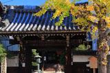 革堂 銀杏黄葉と山門