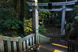 江の島 猫と児玉神社鳥居