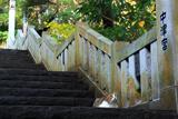 江の島 石段のネコ