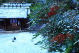 日向大神宮 南天と淡雪の外宮