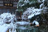 成就院 冠雪した手水鉢の龍