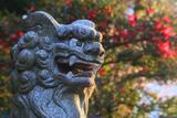 瀬戸神社 狛犬と椿