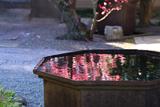 得浄明院 天水鉢の梅鏡