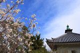 浄福寺 李花と宝蔵