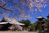 道成寺 本堂と三重塔
