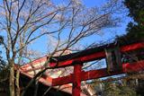 慈眼院姥桜