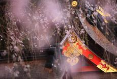 熊野那智大社の桜