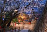 紀三井寺の桜 231段の石段