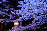 紀三井寺の桜 ご詠歌