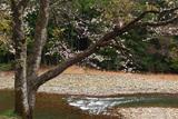 美女湯温泉の桜