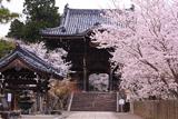 粉河寺の桜 中門