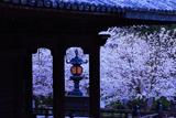 粉河寺の桜 燈籠