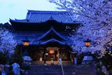 粉河寺の桜 本堂