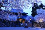 粉河寺の桜 粉河寺庭園