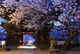 粉河寺の桜 宵桜