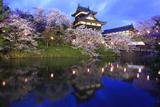 大和郡山城の桜