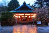 白峯神宮 宵の拝殿と左近の桜